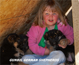 German shepherd puppy, German shepherd breeders, German shepherd puppies