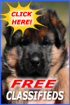 German shepherd dog classifieds