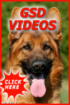 German shepherd dog videos